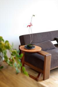 社長自慢の盆栽 - 桂建設の日々ブログ