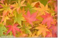 河口湖に紅葉を見に行ってきました - rahayami's lifelog