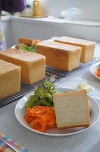 ホシノとホップと…レッスン開催中です! - launa パンとお菓子と日々のこと