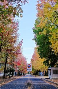 九大筑紫キャンパス - A  B  C