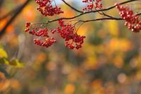 秋の宝石 - 但馬・写真日和