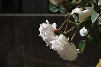 秋のグラミスキャッスル - my small garden~sugar plum~