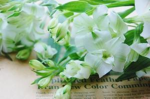 アルストロメリアの花言葉は「凛々しさ」、時代はMaster of Fine Art - *Flower Essence*