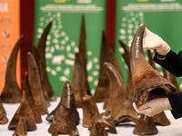 中国が、サイ角取引を限定的に解禁! - 親愛なる犀たちへ