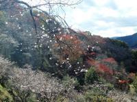 冬桜と紅葉のコラボ・桜山散策2018.11.10(土) - 心のまま、足の向くまま・・・