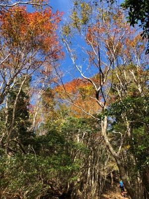 石堂山の紅葉 - ぶどうの雫 (つれづれ御留2)