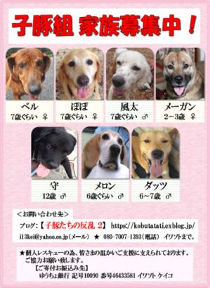 ふれあい会(譲渡会)のお知らせと色々とご報告 - 子豚たちの反乱 2  ~保護犬たちの幸せさがし~