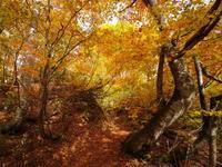 月山山麓 ブナの森 - tokoya3@