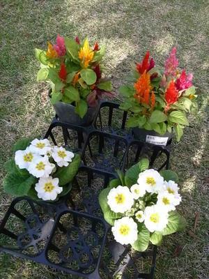 裏庭花壇 -