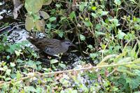 境川でバードウオッチング - Bird Healing