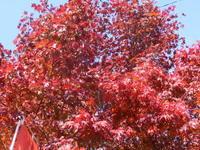紅葉祭り - 家の周りの季節感