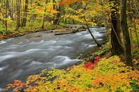 紅葉の奥入瀬渓流-2 - 自然と仲良くなれたらいいな2