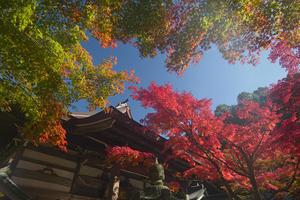 18.11.03:福岡の早い紅葉は呑山観音寺7 - 純さんのスナップショットで四季彩歳