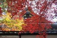 信州の紅葉の名所長円寺 - 暮らしを紡ぐ
