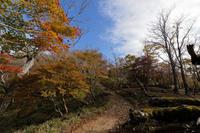 大台ケ原~帰り道の遊歩道 - katsuのヘタッピ風景