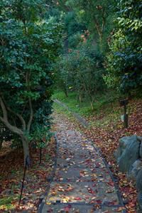 落ち葉(松山総合公園) - かたくち鰯の写真日記2