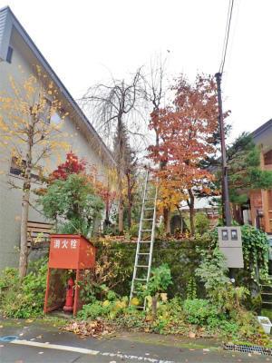 兼業農家の日曜は小さな庭の選定作業! - 浦佐地域づくり協議会のブログ