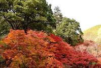 紅葉狩り☆尾関山公園 - できる限り心をこめて・・Ⅲ