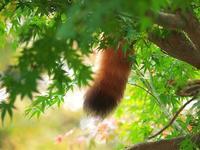 市川市動植物園 - いや、だから 姉ちゃん じゃなくて ネイチャー・・・