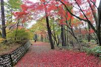 村松公園紅葉 - 畦道、山道 デジタル散歩