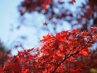 龍泉寺の紅葉 - つれづれ日記