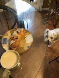 焼き立てパンとミルクティーとココと。 - ココのこころぐ