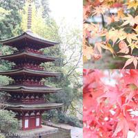 紅葉の室生寺へ行って来ました(*^^*) - Cherry's diary