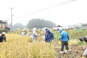 矢吹町田んぼの学校 ~稲刈り編~ - 東京農大 昆虫機能開発研究室×BDLより