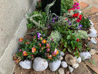 ショップ前の花壇を冬のお花にチェンジ - ルーシュの花仕事