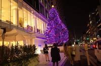 骨董通りのクリスマスツリー - もるとゆらじお