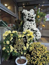 日曜日の菊ローカ - サモエド クローカのお気楽日記