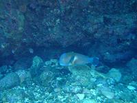 激レア種、発見!!自分的にはね・・^^; - 八丈島ダイビングサービス カナロアへようこそ!