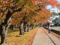 五稜郭公園紅葉情報 - 函館市住宅都市施設公社 スタッフブログ