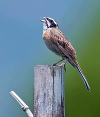 鳥 回想㉜)金峰山の野鳥=熊本県熊本市西区 - チャレンジ! 日々の散歩道