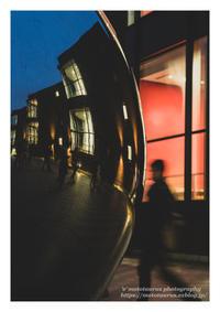 対比 - ♉ mototaurus photography