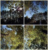 秋の始まり散歩 - 不透明な水晶