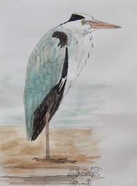 #野鳥スケッチ #Naturejournal 『アオサギ』 Grey heron - スケッチ感察ノート (Nature journal)