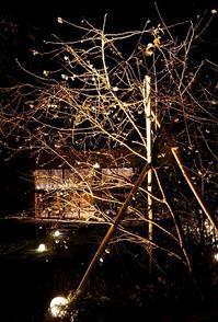 ライトアップ、夜桜 (11月) - 金沢犀川温泉 川端の湯宿「滝亭」BLOG