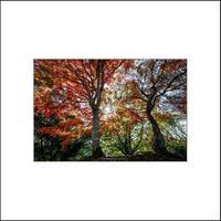秋のざわめき - 写酒楽々の目線