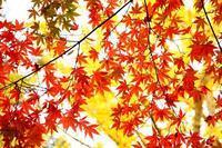 *秋探しの旅* - 静かな時間