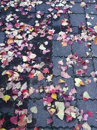 すっかり秋です。。 - じぶんを知ろう♪アトリエkeiのスピリチュアルなシェアノート