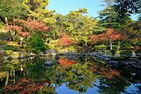 もみじ谷2(弥彦公園) - くろちゃんの写真