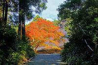 国上寺 - くろちゃんの写真