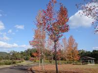 『ぎふ清流里山公園の秋散歩2』 - 自然風の自然風だより