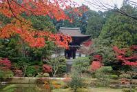 忍辱山(にんにくせん)円成寺は晩秋です。 - ratoの山歩き