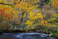 紅葉の奥入瀬渓流-3 - 自然と仲良くなれたらいいな2