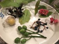 こんな可愛いお土産・・・「お庭の木の実がお土産だなんて・・・」編 - ドライフラワーギャラリー⁂納屋カフェ 岡山