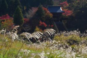 18.11.03:福岡の早い紅葉は呑山観音寺8-完 - 純さんのスナップショットで四季彩歳