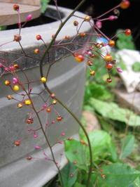 10月秋の風景 - 南阿蘇 手づくり農園 菜の風