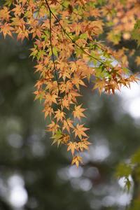 紅葉の季節 - YOSHIの日記